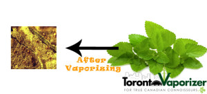 Vaporizing Lemon Balm