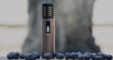 Arizer Air Vaporizer with blueberries in the park